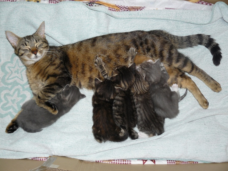 nichée de chatons Chaton12