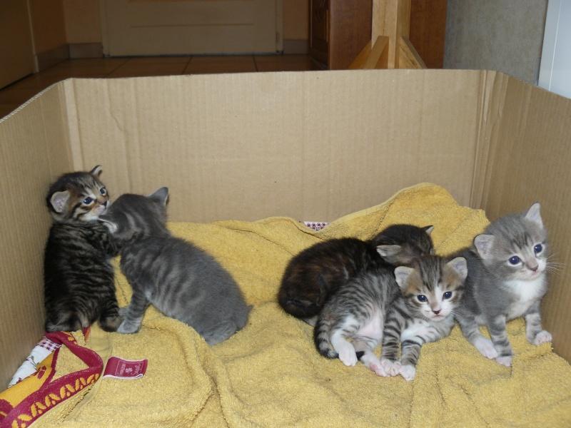 nichée de chatons Chaton14