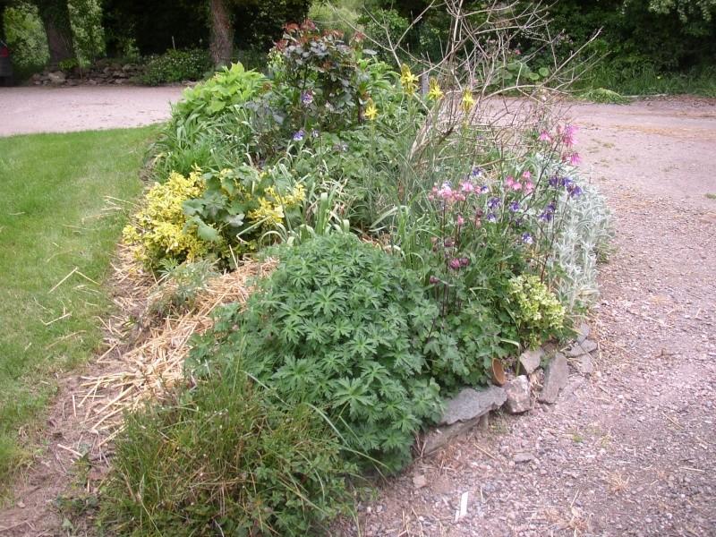 Viburnum, un arbuste formidable ! - Page 4 Mai_0412