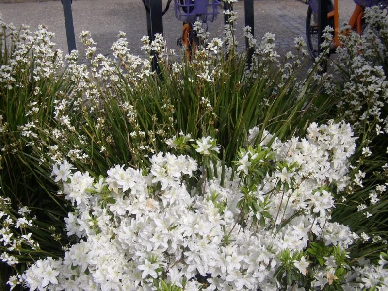 expo dans les jardins des remparts de vannes Vannes15