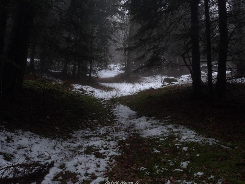 Balade hivernale au Puy de Dôme P1050321
