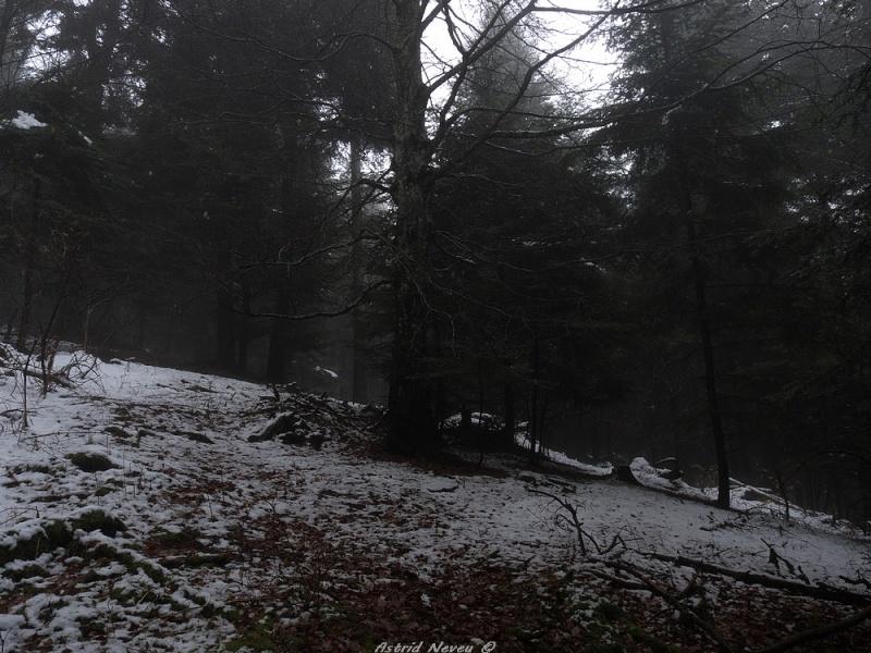 Balade hivernale au Puy de Dôme P1050410