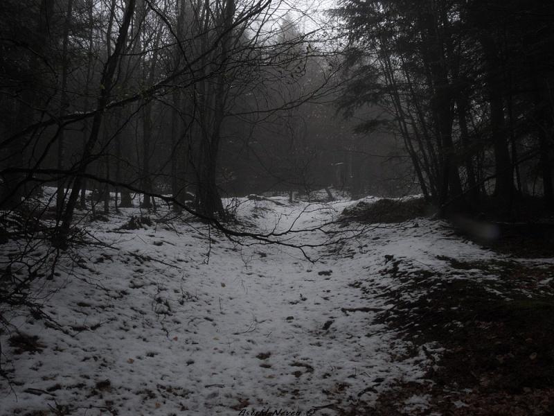 Balade hivernale au Puy de Dôme P1050411