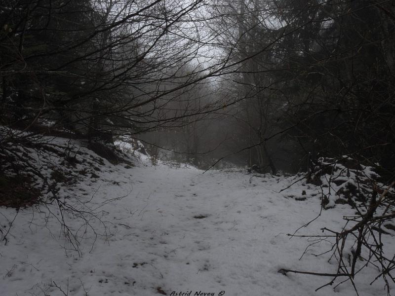 Balade hivernale au Puy de Dôme P1050412