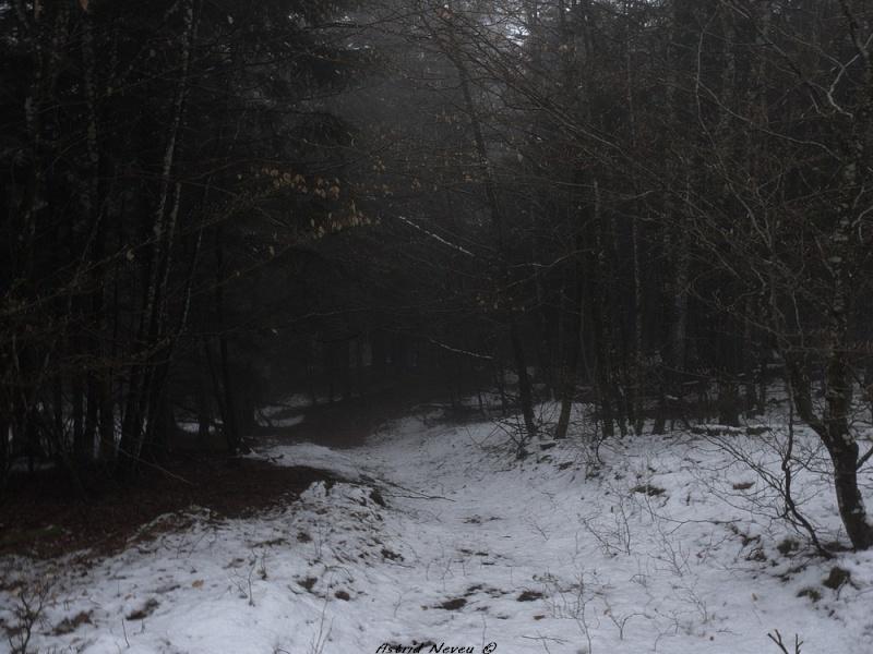 Balade hivernale au Puy de Dôme P1050413