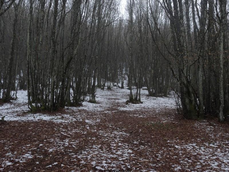 Balade hivernale au Puy de Dôme P1050415