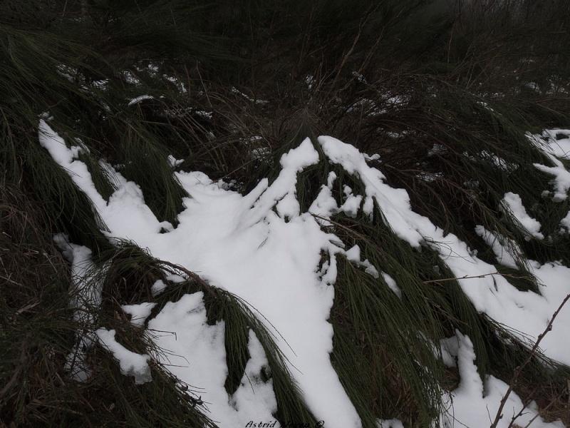 Balade hivernale au Puy de Dôme P1050418