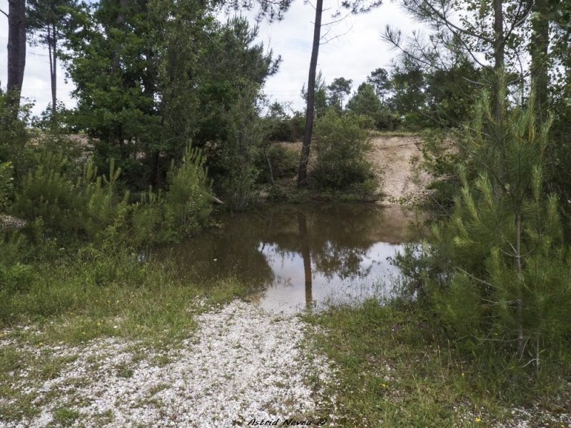 Inondations et débordements divers dans le Sud Bordelais P1080215