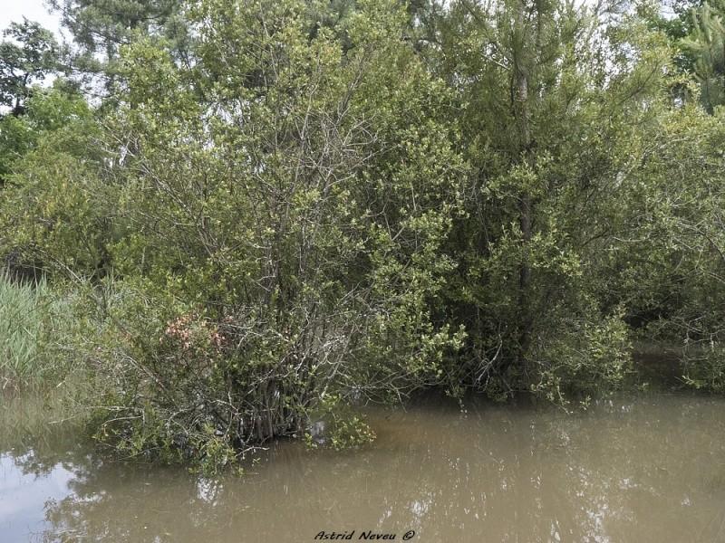 Inondations et débordements divers dans le Sud Bordelais P1080216