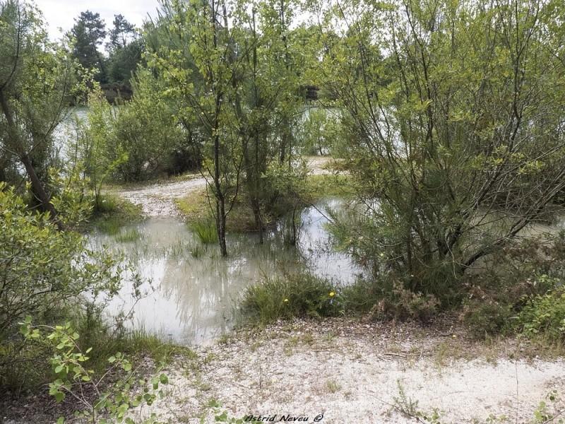 Inondations et débordements divers dans le Sud Bordelais P1080217