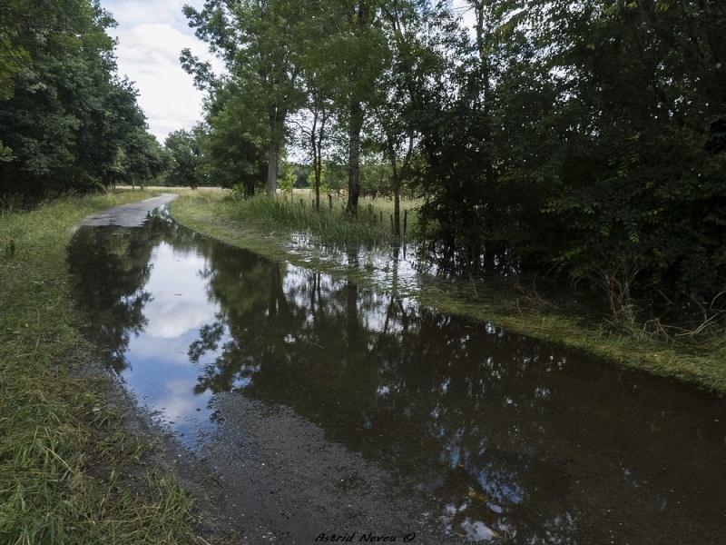 Inondations et débordements divers dans le Sud Bordelais P1080226
