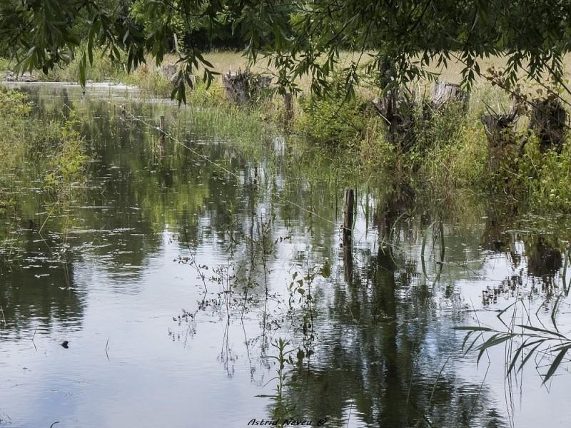 Inondations et débordements divers dans le Sud Bordelais P1080228