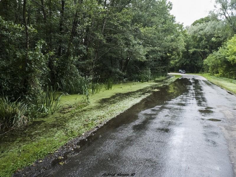Inondations et débordements divers dans le Sud Bordelais P1080230