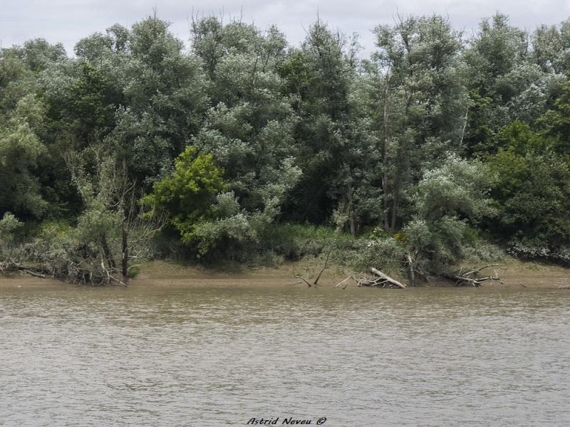 Inondations et débordements divers dans le Sud Bordelais P1080311