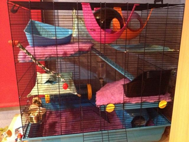 [Vends ou échange ]cage freddy Max deux !  Img_2010