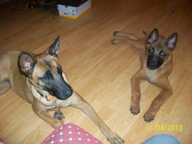 Ma chienne en gestation a des pertes gluante rouge un peu rose - Page 4 54511