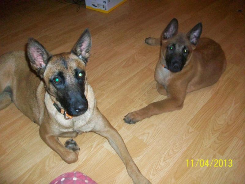 Ma chienne en gestation a des pertes gluante rouge un peu rose - Page 4 54612
