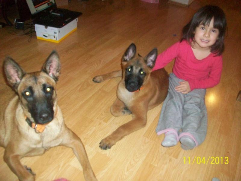 Ma chienne en gestation a des pertes gluante rouge un peu rose - Page 4 54711