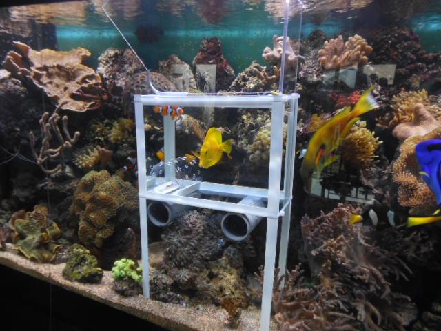 attrappe poissons Dscn0314