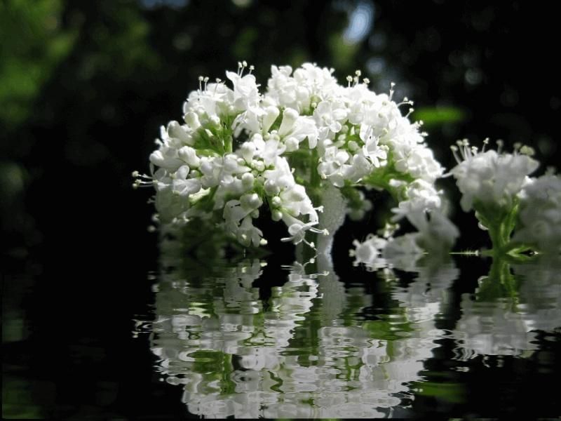 Wildblumen ( Sammelthread) - Seite 3 Bal10