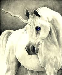 Votre Animal Totem Alicor10