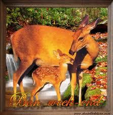 Votre Animal Totem Images14