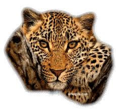 Votre Animal Totem Portra12