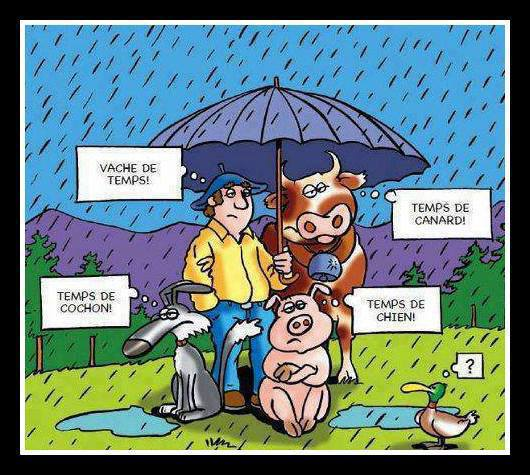 il pleut 2013 - Page 6 93609410