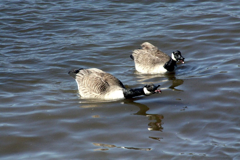 Outardes: Casse-toi, pauv' con Img_2911