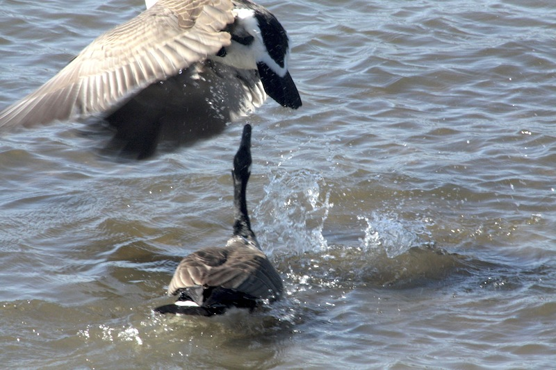 Outardes: Casse-toi, pauv' con Img_2912