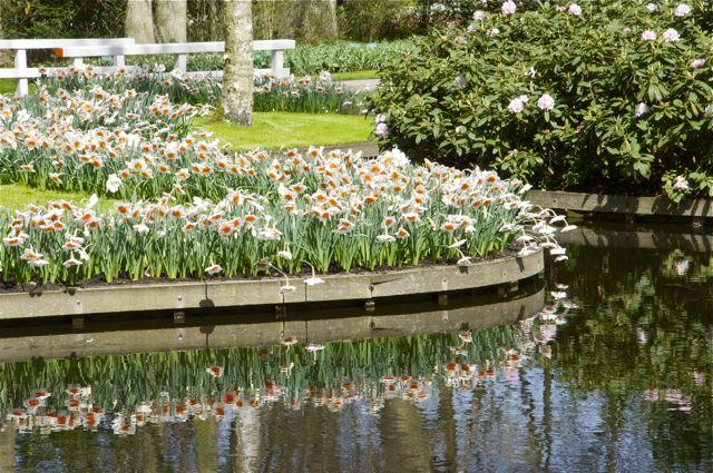 Tulipes, jacinthes et orchidées à Keukenhof _dsc0215