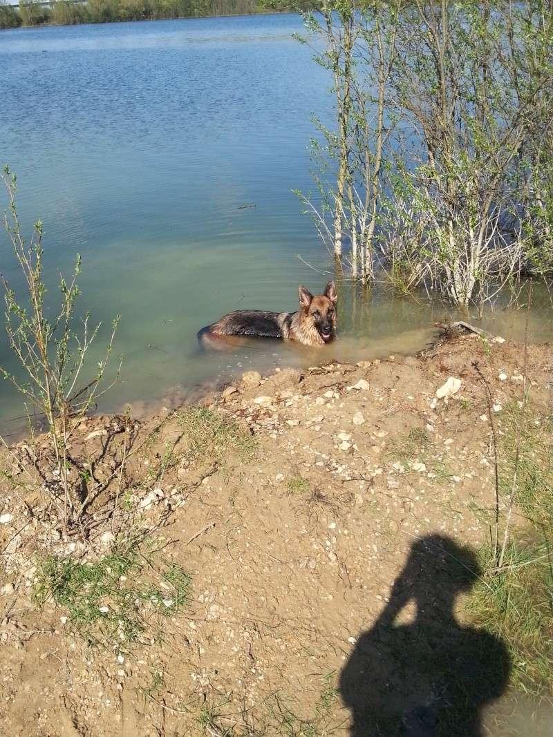 Photo de vos chiens à la plage! Edjy_v13
