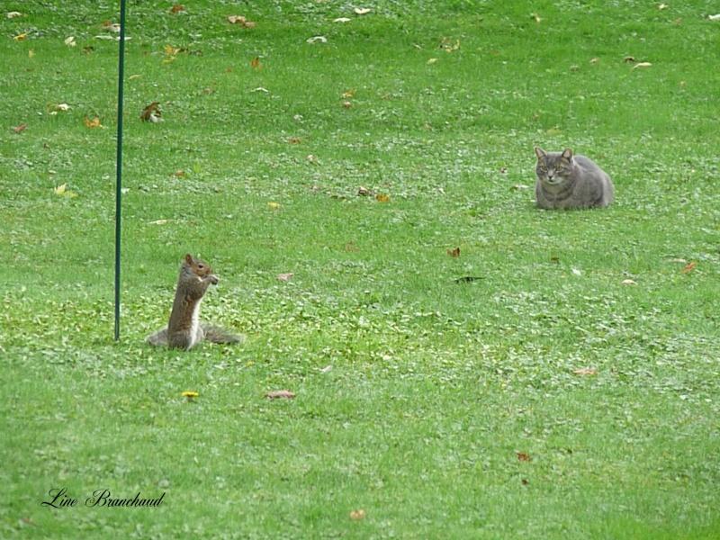 Écureuil vs chat vs oiseaux Acureu10