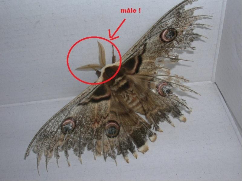 Urgent ! papillon de nuit ! Dscn1717