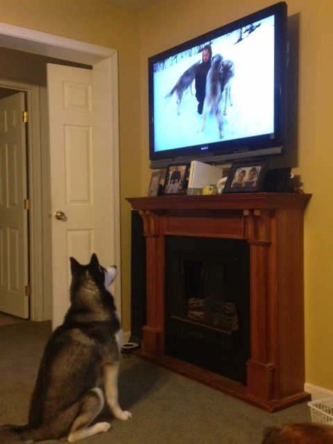 Sasha watching the wolves-Cant post in the HOTM? Photo10