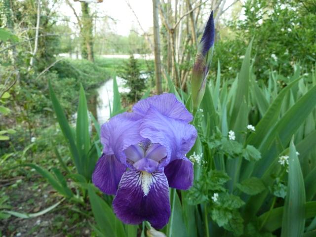toutes les fleurs de couleur violette, bleue,  - Page 2 P1060710