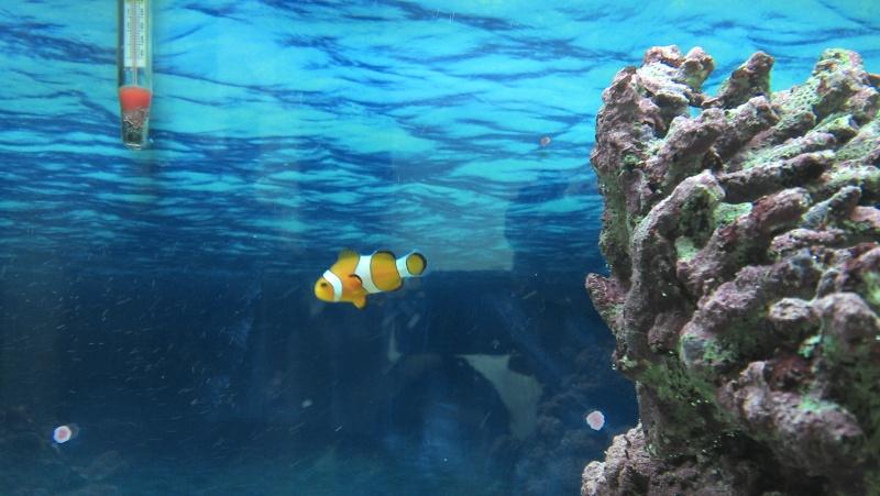 Aqua marin 120L Img_2014
