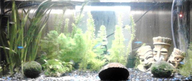 Aquarium prêt à être peuplé mais... Img_2010
