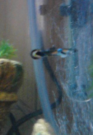 Aquarium prêt à être peuplé mais... Img_2011