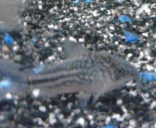 Aquarium prêt à être peuplé mais... Img_2013