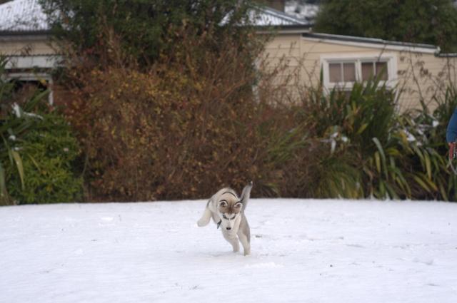 Siva's Scrapbook - Siva's First Snow Day Afa_3612