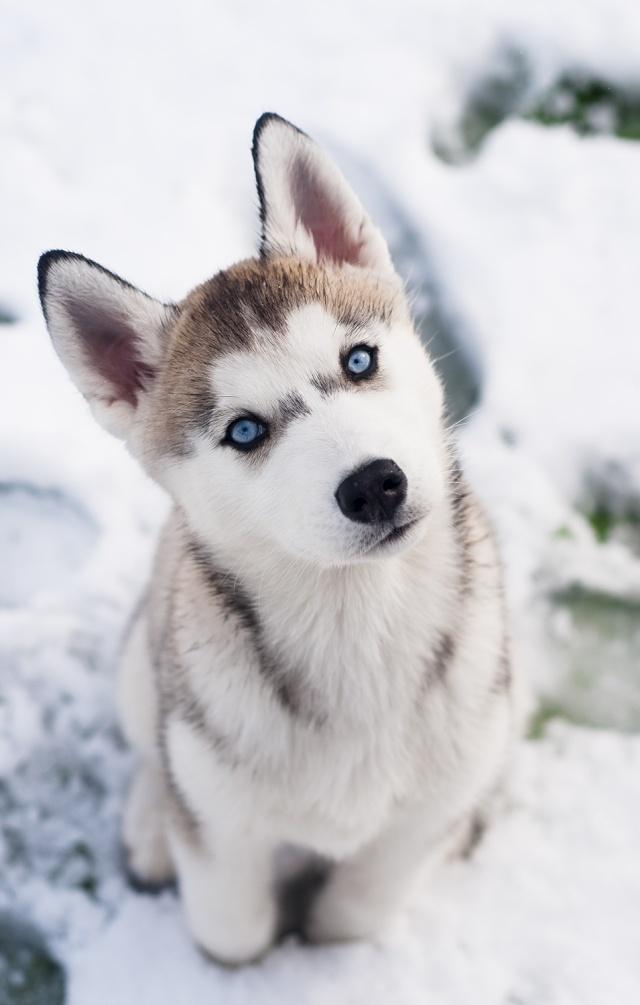 Siva's Scrapbook - Siva's First Snow Day Afa_3910