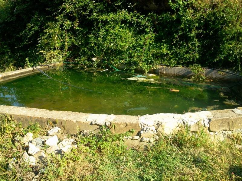 louzi3a (zerd) au village de TAREMANT d'aokas  (14-06-2013) Photo477