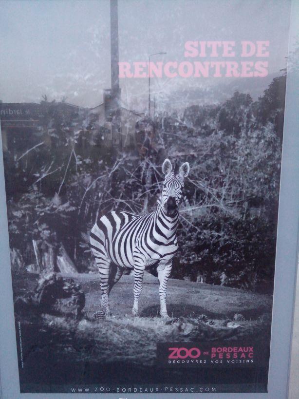 zebra-dating.com - Page 9 Rencon11