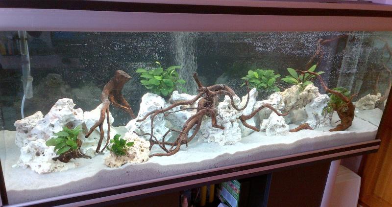 Aquarium 450L Aquatlantis cichlidés Img-2012