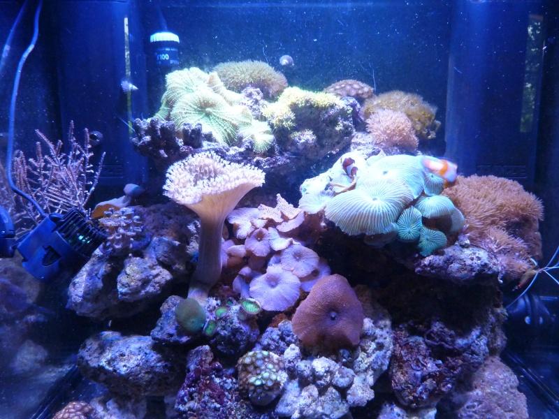 Micro reef de 120l: c'est parti! P1010514