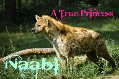 Wolf Shop :D Naabi10