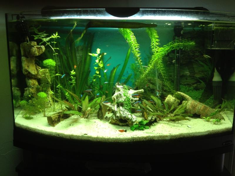 que pensez vous de mon aquarium principal de 150l ? Img_0712