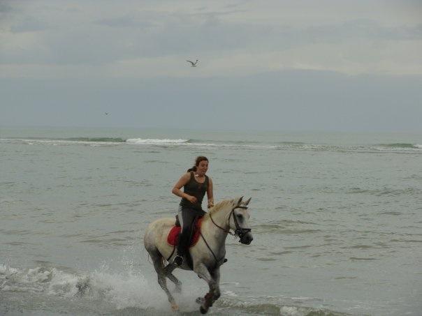 Propose cheval  en TP, DP  ou au pair Oui_3610