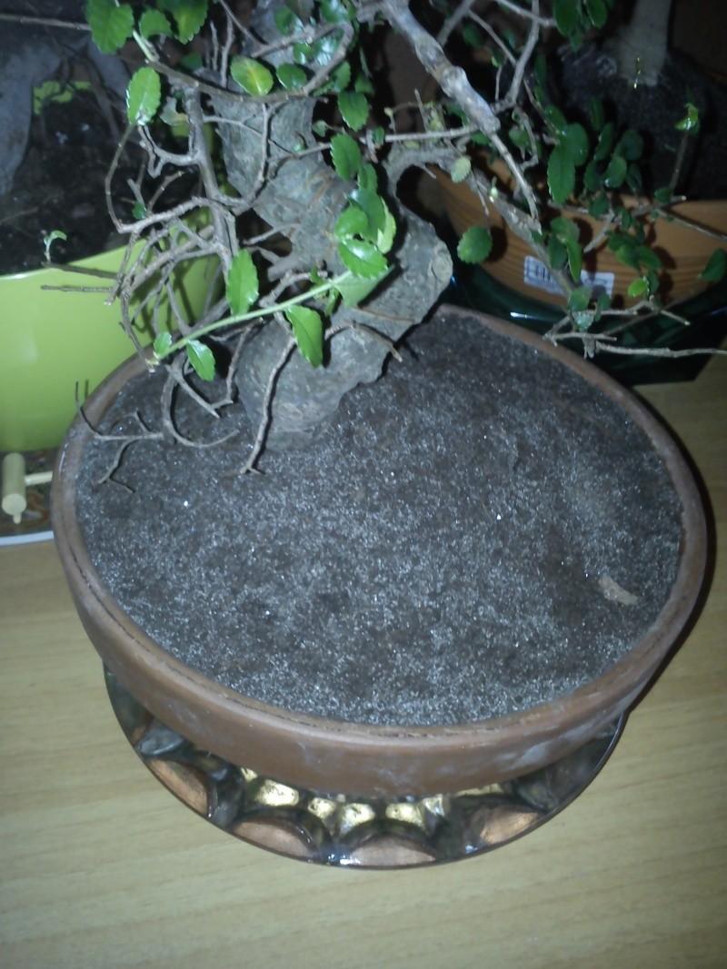 L'OLMO perde le foglie 01510